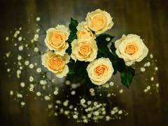 Plantgrowpick | Variety of Roses in Australia