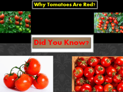 Why Tomatoes Are Red? | John Deschauer