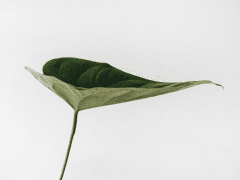 PlantGrowPick Pty Ltd Australia | Trending Plants