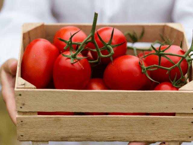 Grow the Juiciest Tomatoes with John Deschauer