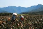 格外農品股份有限公司 work environment photo