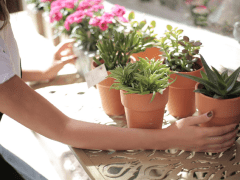 How to Choose Healthy Plants