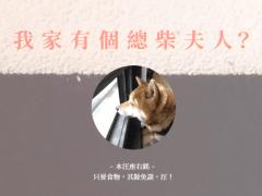 柴柴 - 單頁式形象網站