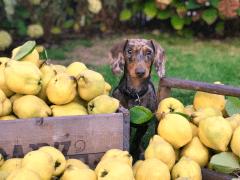 Top 5 Best Pet Food Brands | Stephanie Taunton