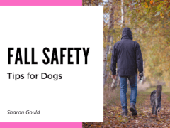 Fall Safety Tips for Dogs