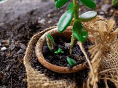 Plantgrowpick | Successful Gardening Tips for Begi