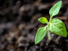 Plantgrowpick Pty Ltd Australia · Photography - Pe