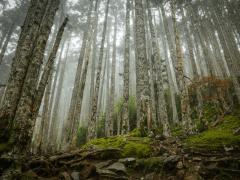 雪山黑森林